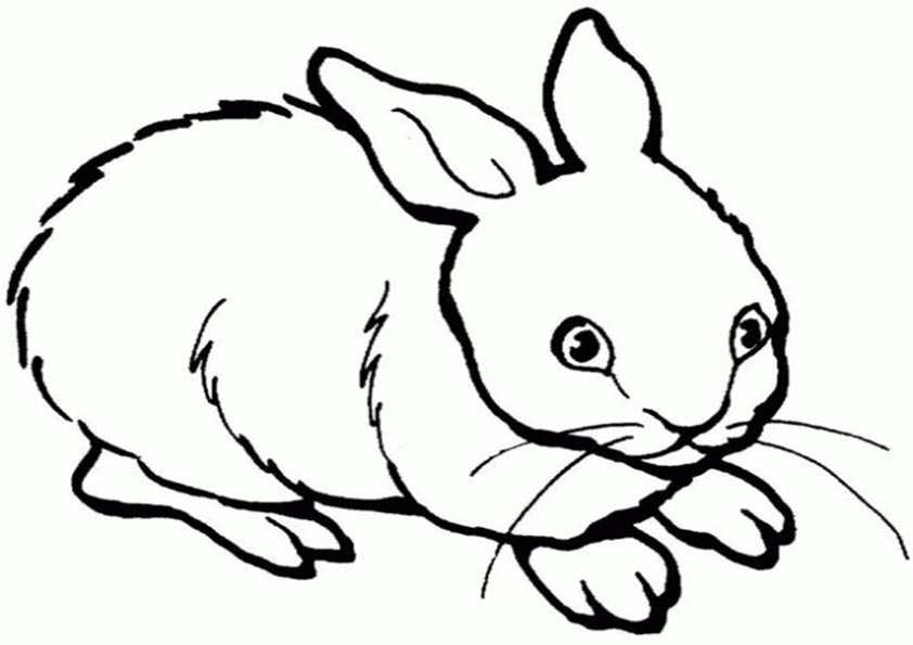 Kaninchen ausmalen