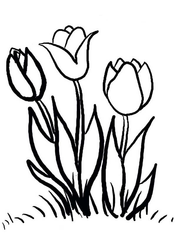 Tulpen malvorlagen