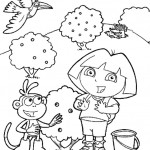 Dora 11