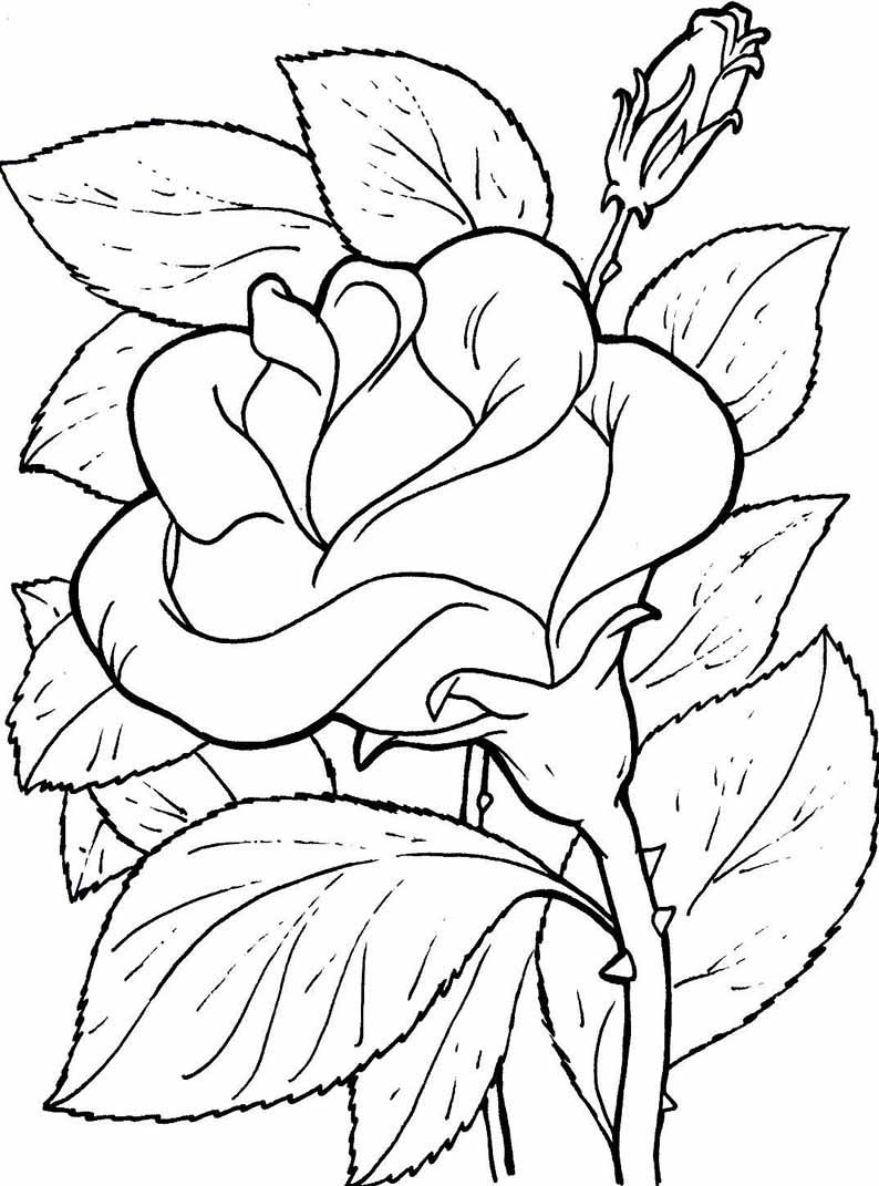 Ausmalbilder Blumen 12 Ausmalbilder