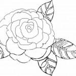 Blumen 13