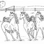 Pferde 24