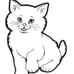 Katzen 5