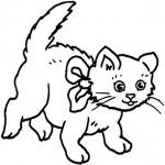 Katzen 11