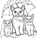 Katzen 20