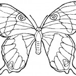 Schmetterling 5