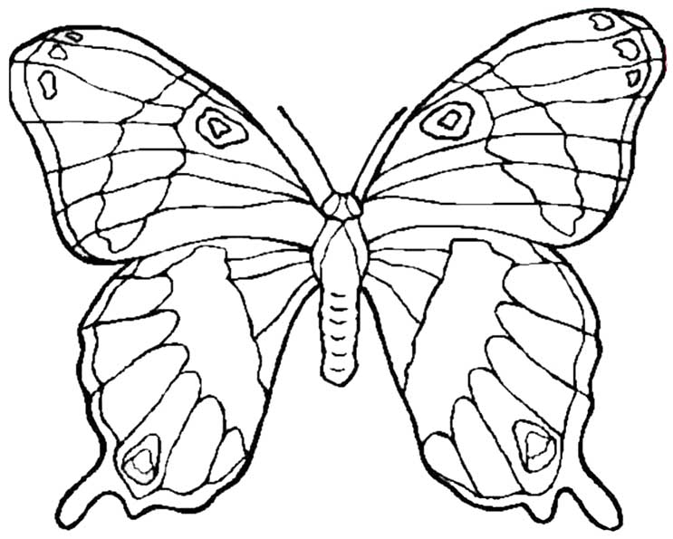 Schmetterling 5 ausmalen