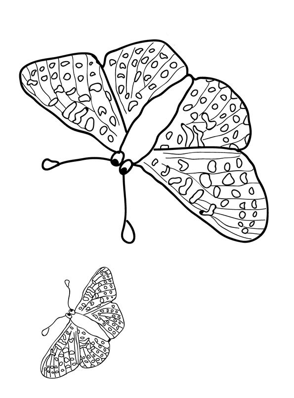 zwei Schmetterling