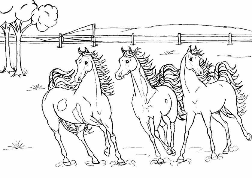 drei pferden ausmalen