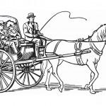Pferde 29
