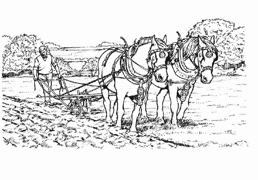 Pferde pflügen die Boden