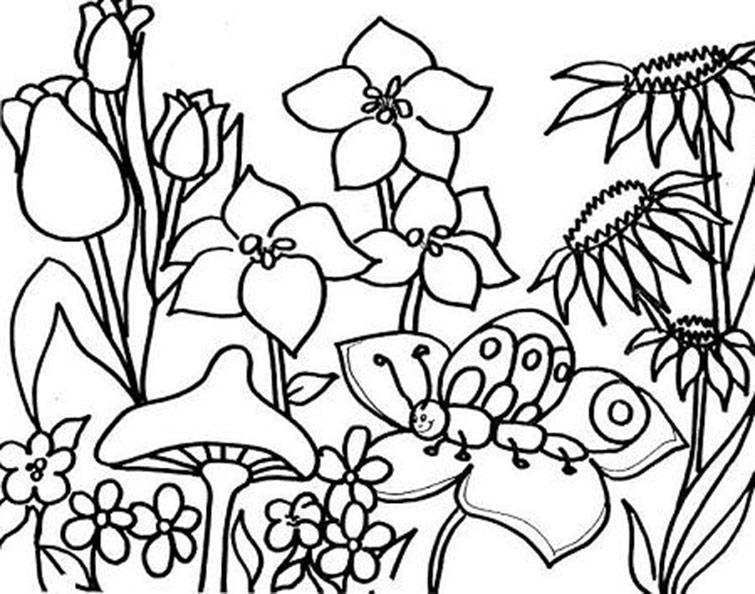 Blumen, Pilze und Schmetterlinge