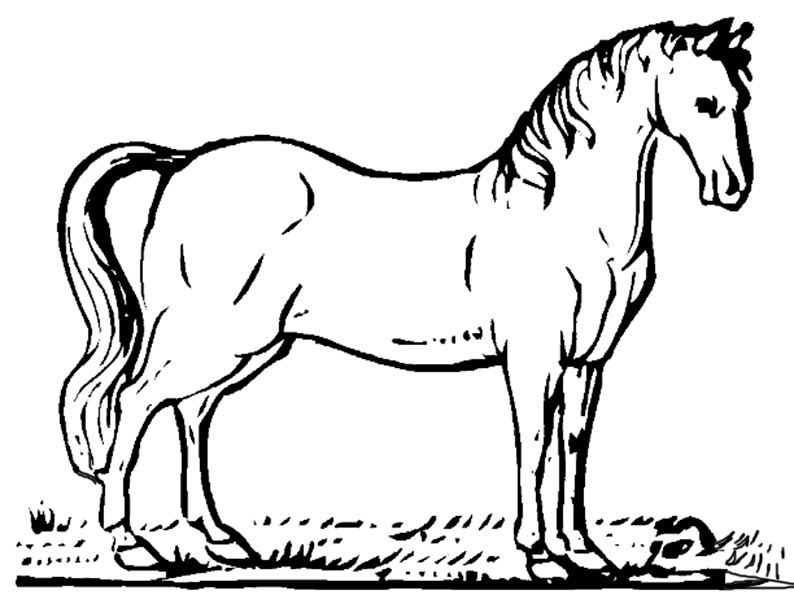 pferd zum ausmalen 31