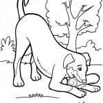 Hunde 1