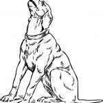 Hunde 12
