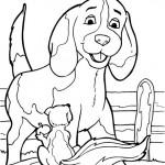 Hunde 14