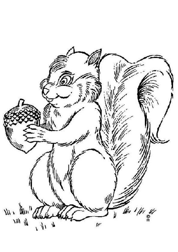 Ausmalbilder Eichhörnchen 4
