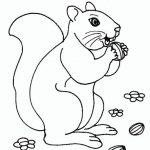 Eichhörnchen (9)