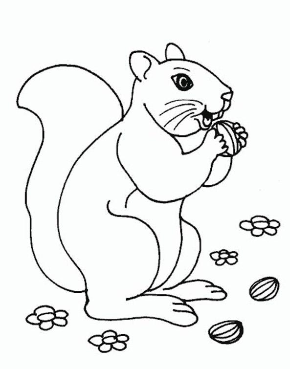 Ausmalbilder Eichhörnchen 9