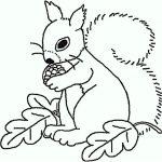 Eichhörnchen (11)