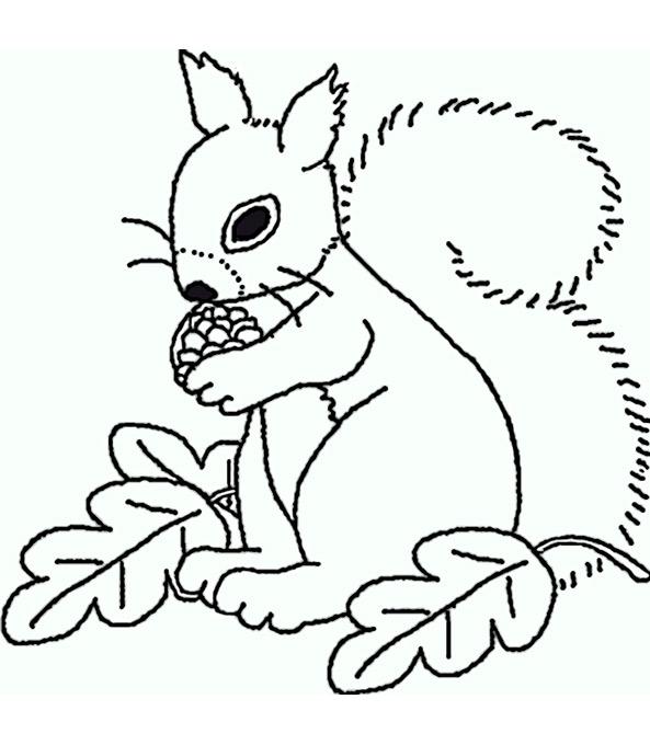 Ausmalbilder Eichhörnchen 11