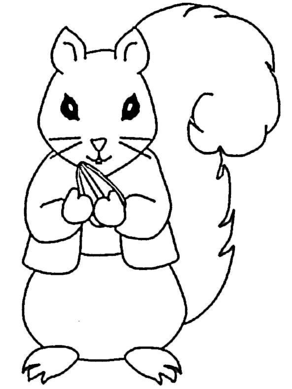Ausmalbilder Eichhörnchen 5